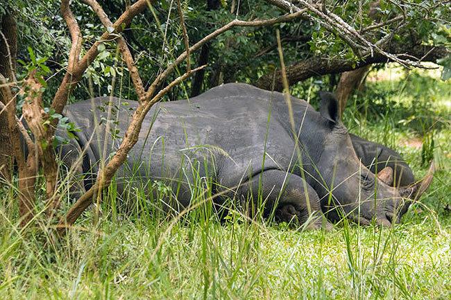 Rhino Tracking Experience