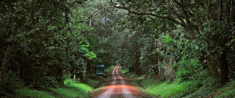 Visit Budongo