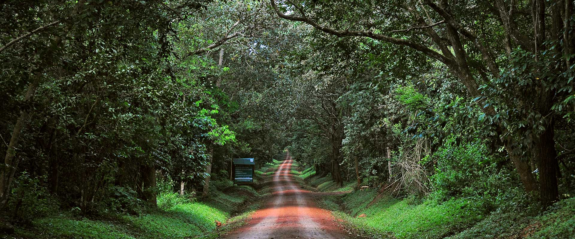 budongo-forest reserve